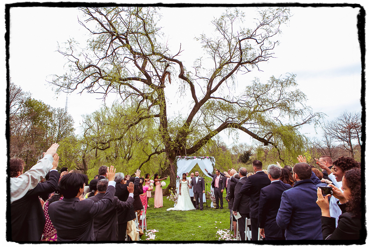 Guests raise their hands as they bless the new marriage under a large willow tree at this April wedding at the Palm House at Brooklyn Botanic Garden.